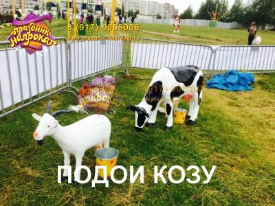 Подои козу - аттракцион